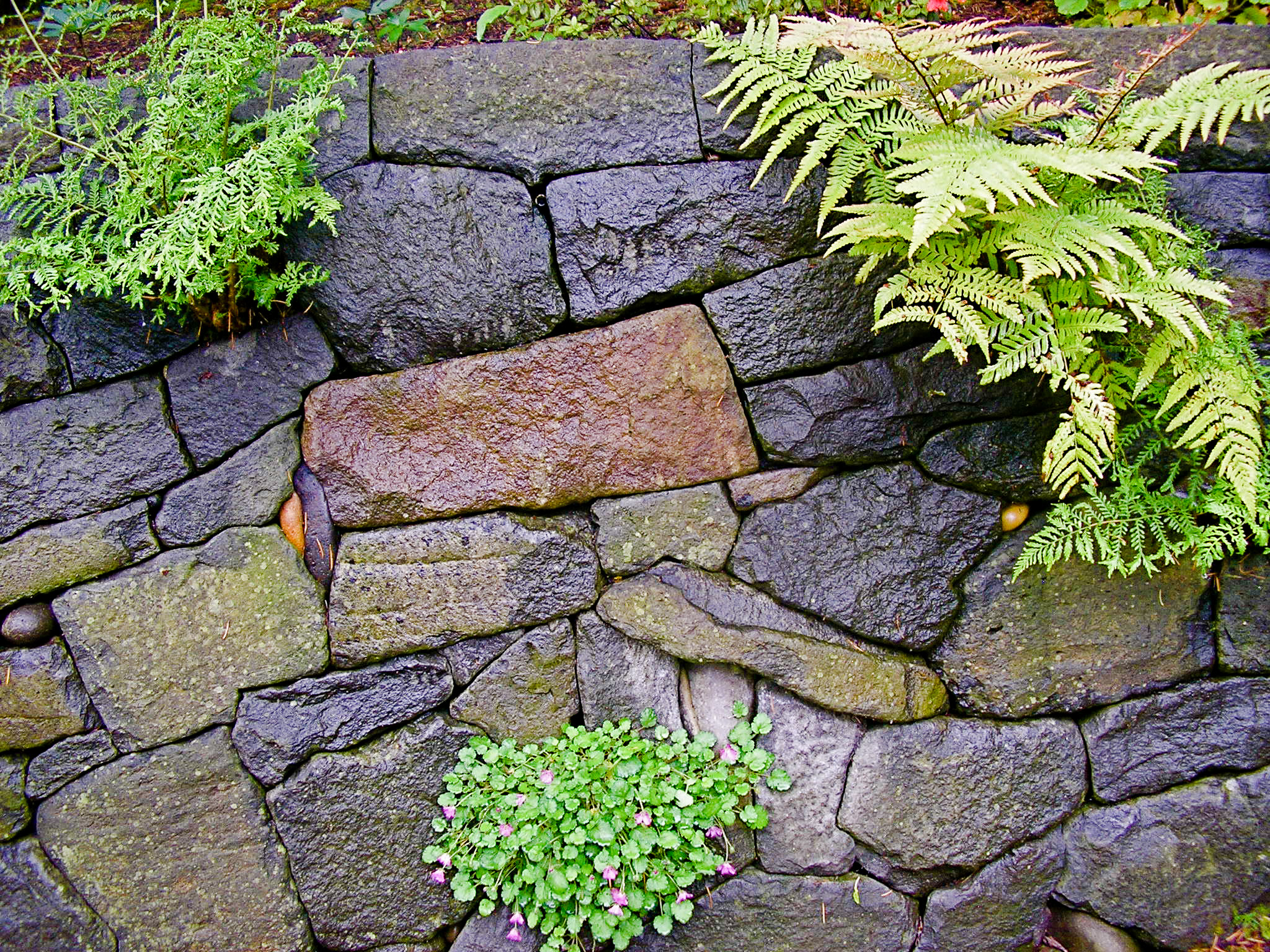 Eric Contey Stonework – Wall detail at the Rhododendron Gardens, Portland, OR