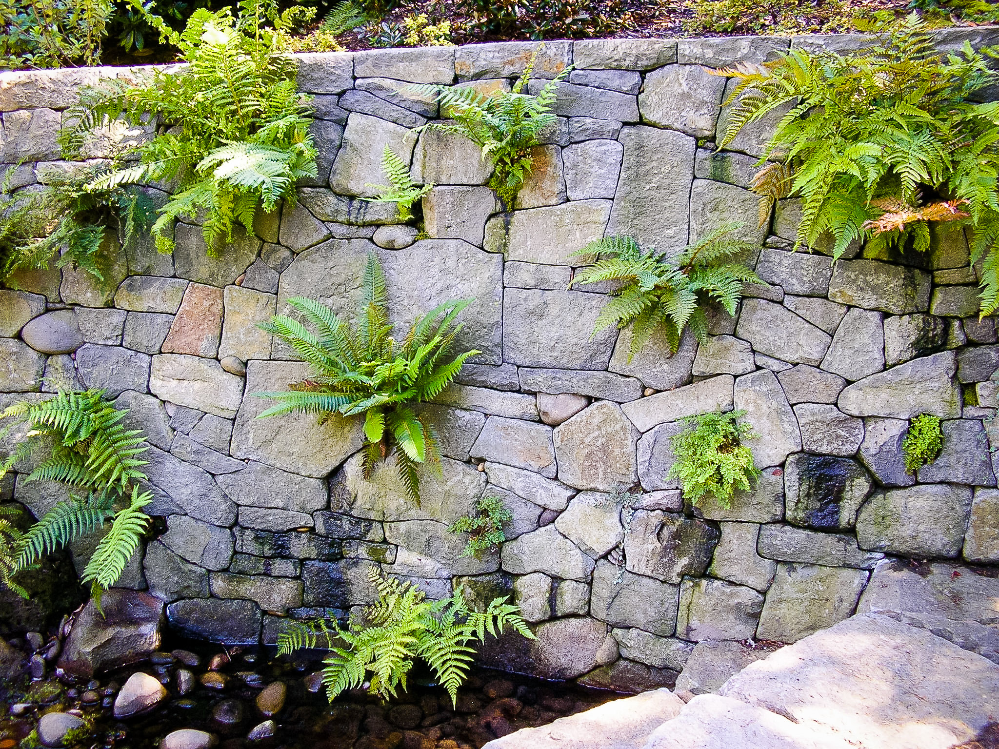 Eric Contey Stonework: Rhododendron Gardens fern wall and pool